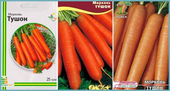 как посадить морковь