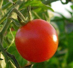 Подкормка томатов