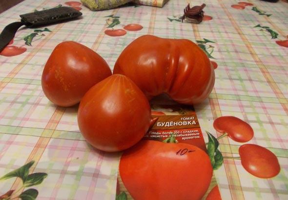 Сорт томатов Буденовка