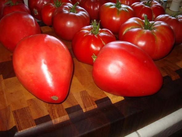 Сорт томатов Мазарини
