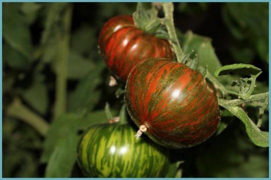 посадка томатов