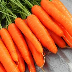 Сорт моркови Сентябрина