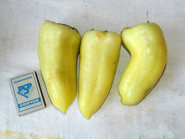 Перец Белоснежка