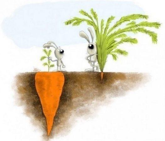 морковь прореживание на грядке