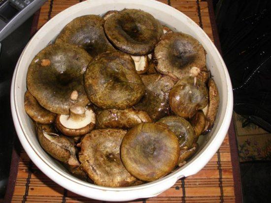 грибы грузди фото и описание