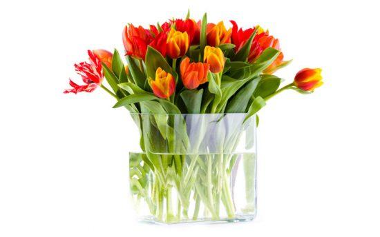 как сохранить тюльпаны