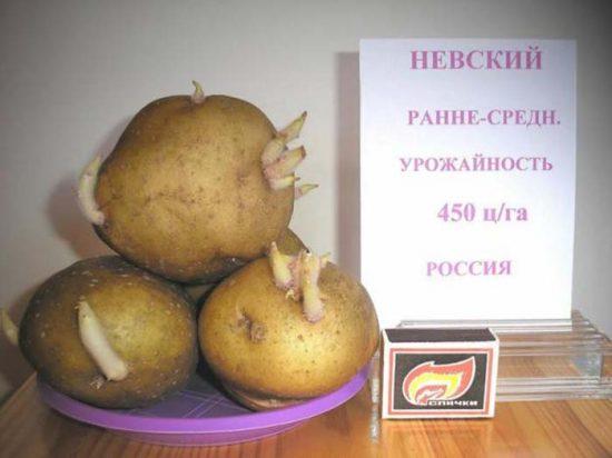 картофель невский описание сорта