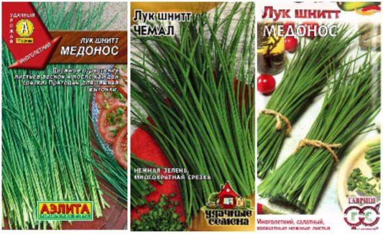 лук-шнитт выращивание и уход