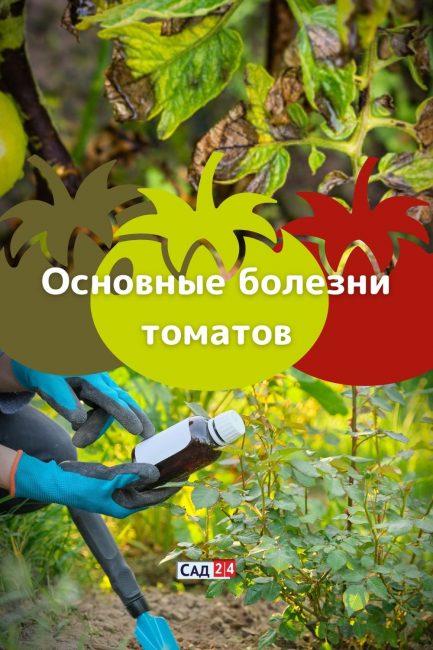 Болезни томатной рассады