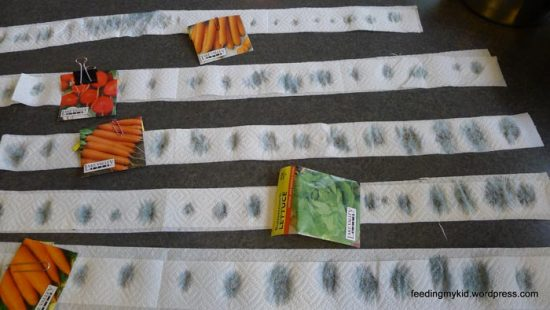 как приклеить семена моркови на бумагу
