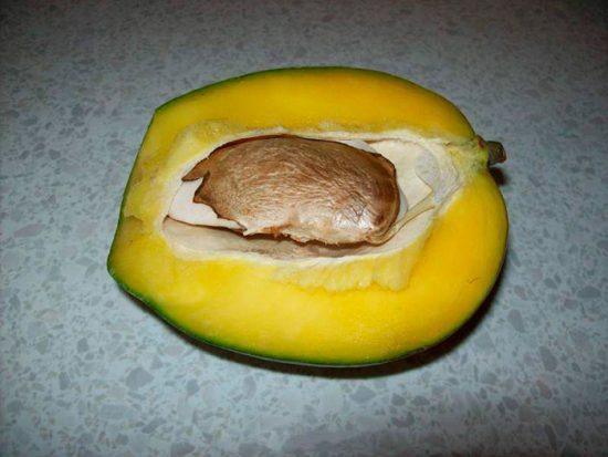 как прорастить манго