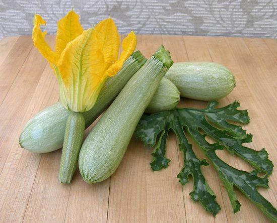 как прорастить семена кабачков