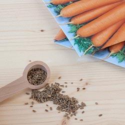 как быстро прорастить семена моркови для посадки