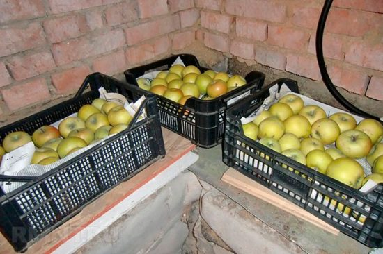 как хранить яблоки