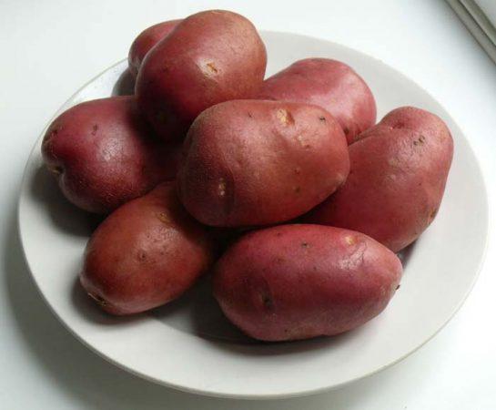картофель рокко описание сорта