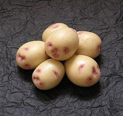 картофель синеглазка: описание сорта, фото, отзывы