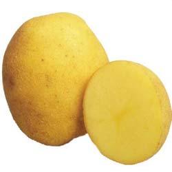 картофель венета описание сорта