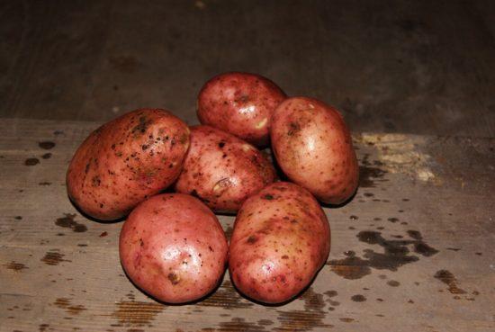 картофель журавинка описание сорта