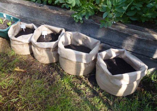 картошка посадка в мешках