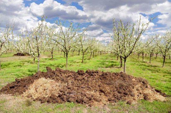удобрение для яблонь весной