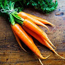 что делать не всходит морковь