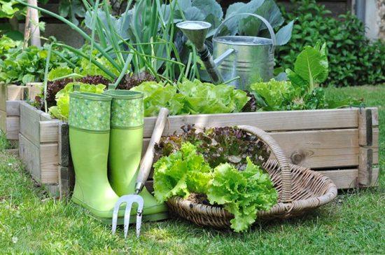 что можно посадить в тени из овощей
