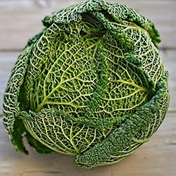 савойская капуста выращивание и уход