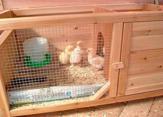 брудер для выращивания цыплят своими руками