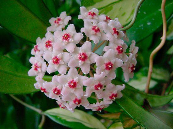как выращивать цветы