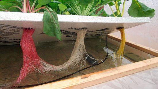 технология выращивания овощей