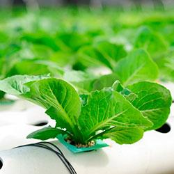 методы выращивания зелени