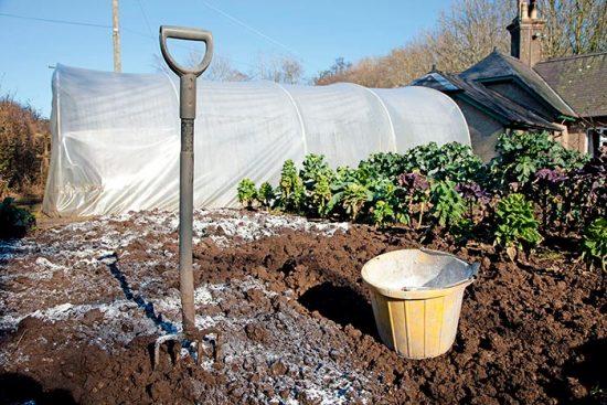 известкование почвы осенью норма внесения