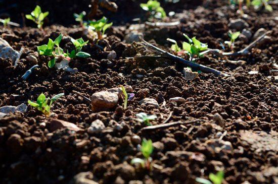 кислотность грунта для растений