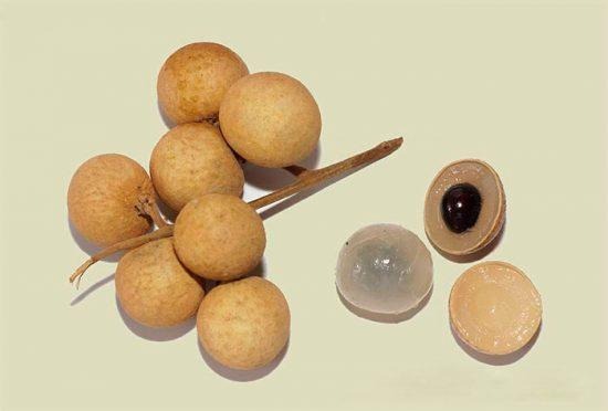 лонган фрукт выращивание в домашних условиях