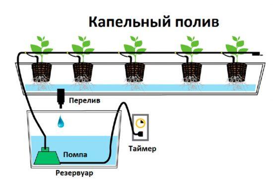 оборудование для выращивания овощей гидропоникой
