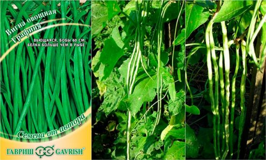 вигна овощная графиня выращивание отзывы