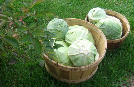 где хранить овощи