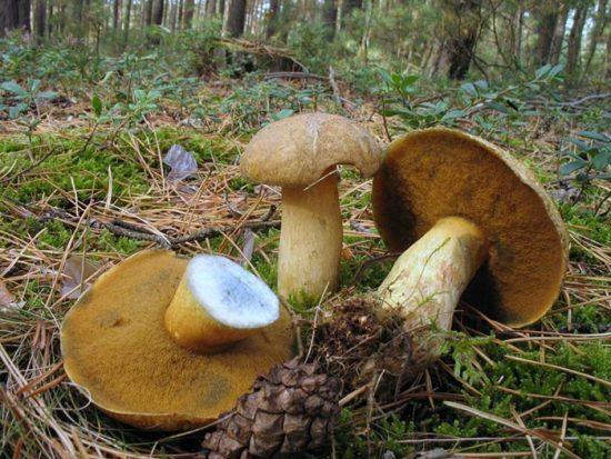 свойства грибов