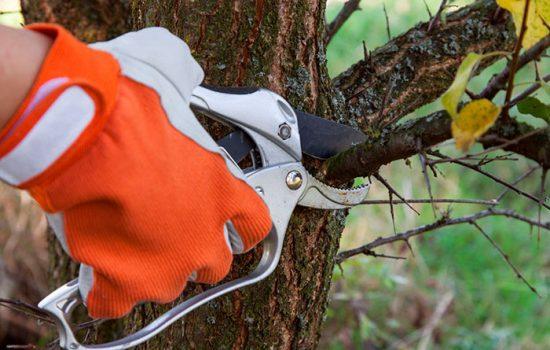 вредители деревье