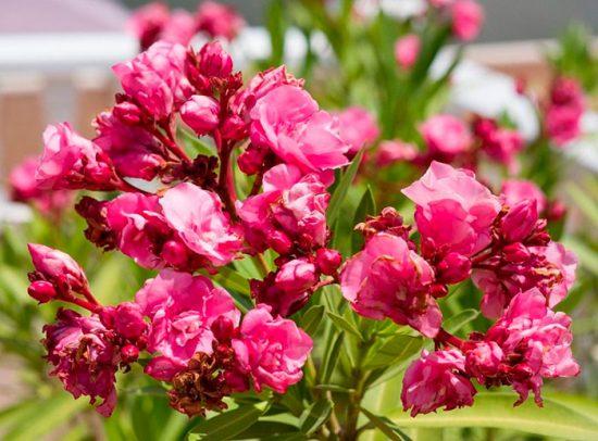 цветы дома