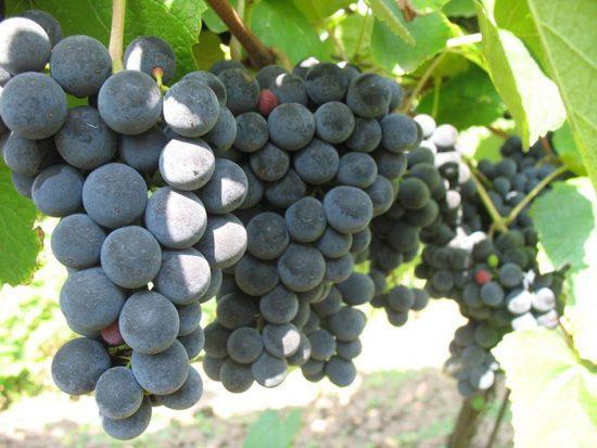 выращивание фруктов