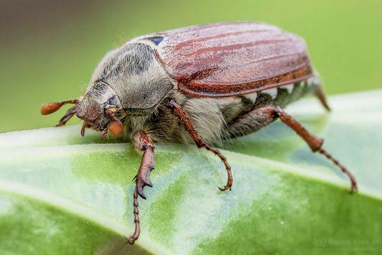 народные средства от жуков