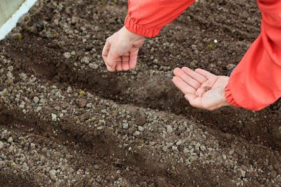 что можно высаживать в грунт осенью