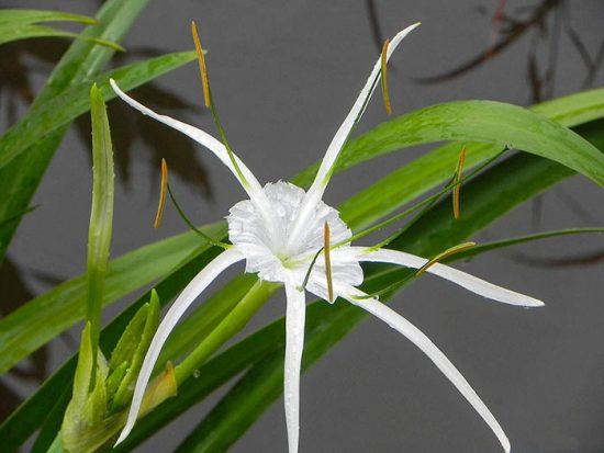 цветущие горшечные растения