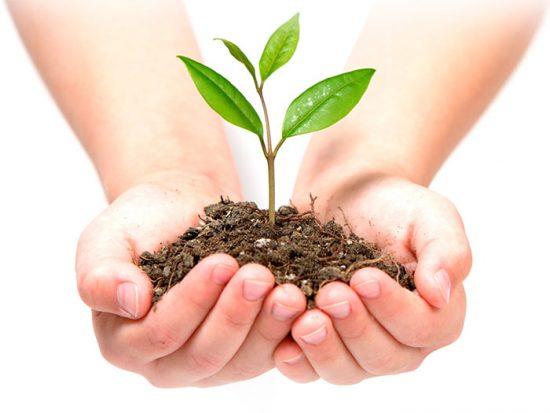 защита растений от гнилей