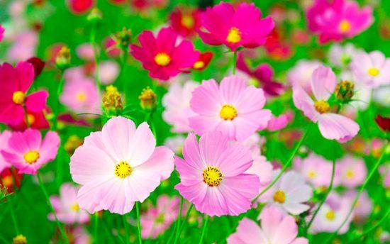 посадка цветов в летний период