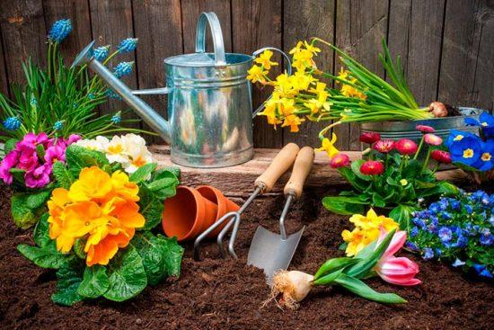 работы в саду и июне