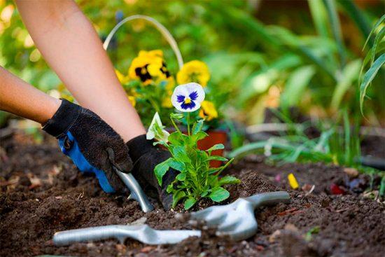 посадка цветов летом