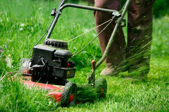 как подготовить лужайку к зиме