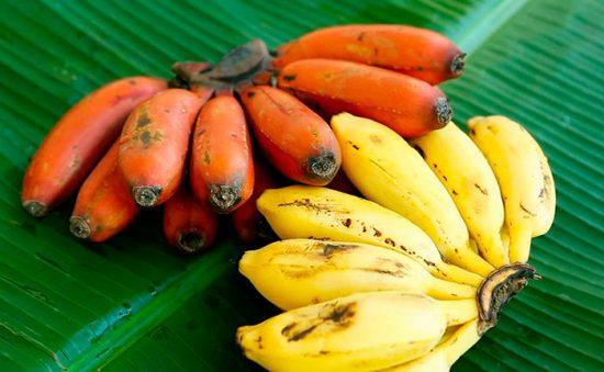 бананы в рационе